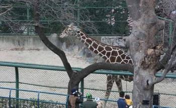 Zoo_32