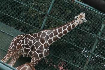 Zoo_37